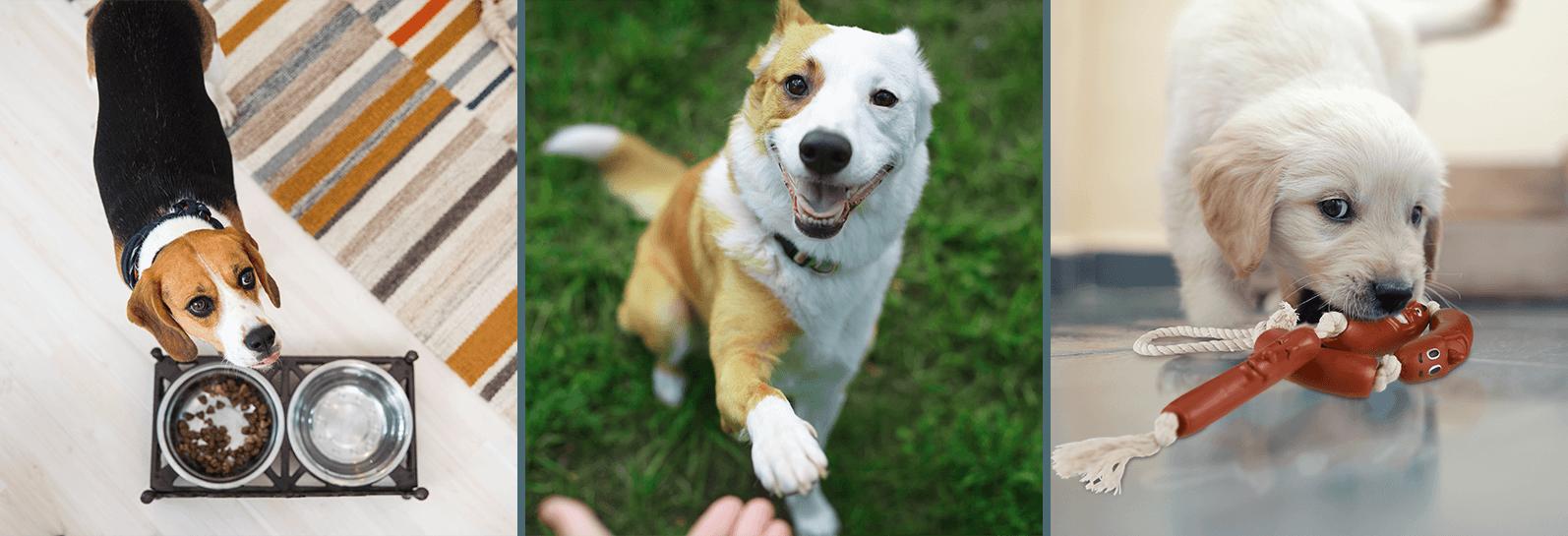 Hunde-Zubehör