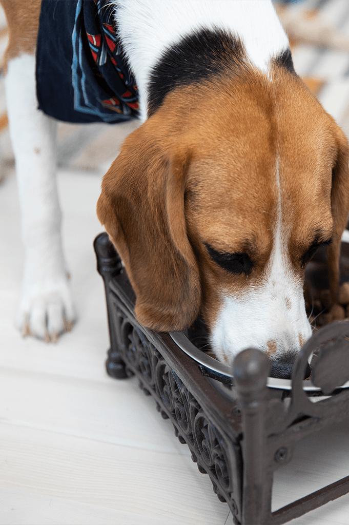 Kategorie Hunde-Zubehör