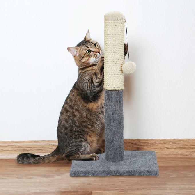 Kategorie Katzen