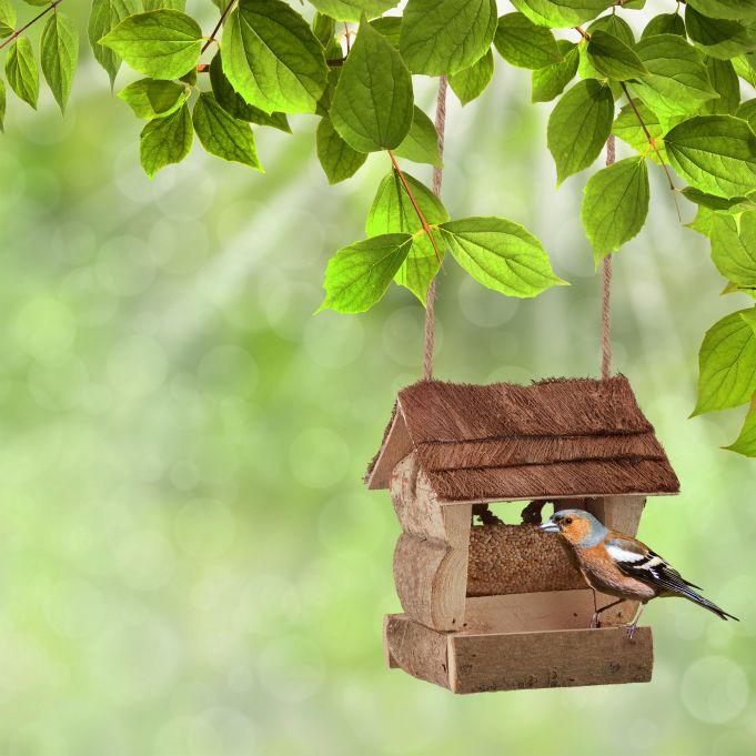 Kategorie Vogelhäuser
