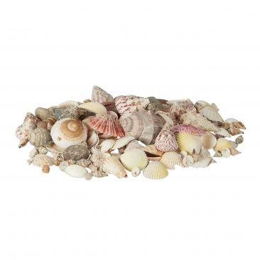 Muschel Set mit echten Muscheln und Schnecken