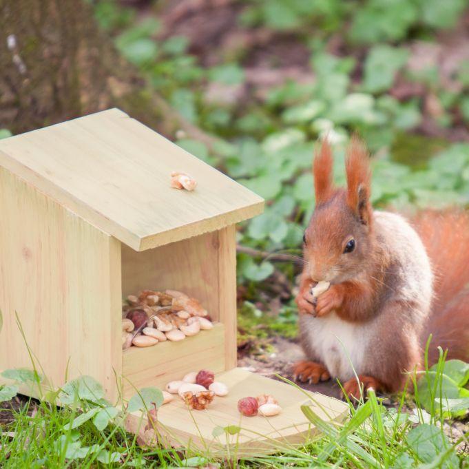 Eichhörnchen Futterhaus zum Stellen2